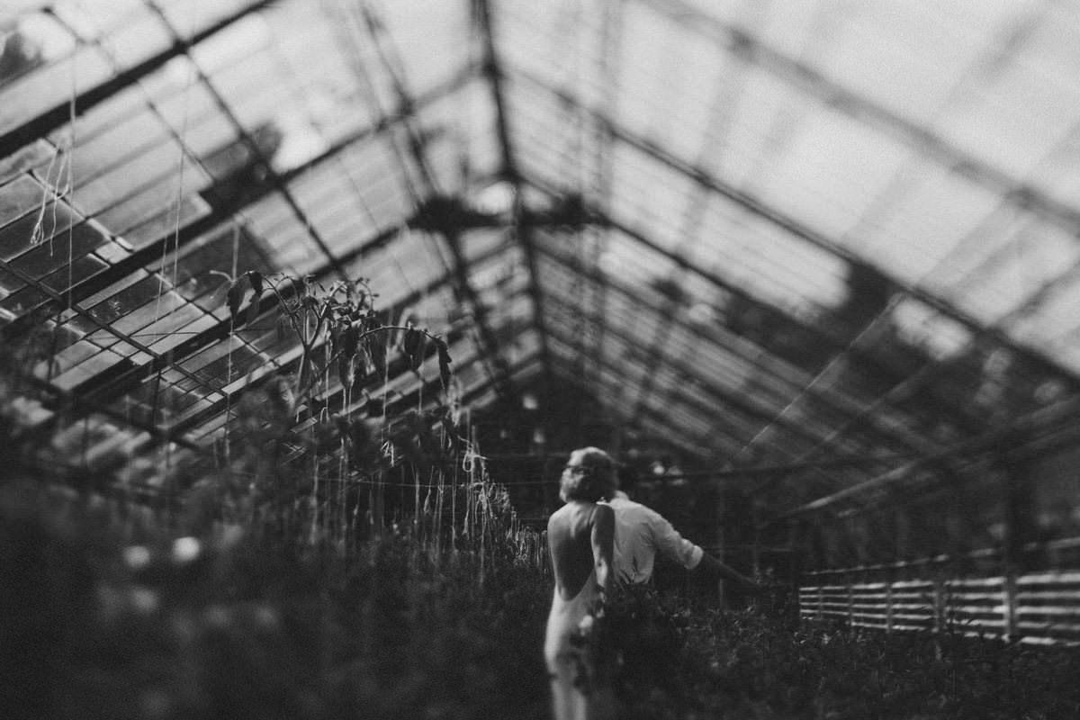 IA greenhouse 013
